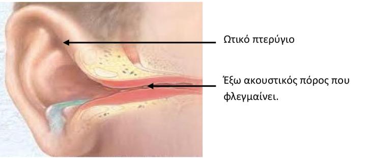 ΚΑΛΟΚΑΙΡΙ ΚΑΙ ΩΤΙΤΙΔΕΣ-1