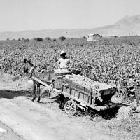 3 Ιουνίου 1934: Οι χαλαζόπληκτοι του Ζευγολατιού και η απόπειρα φόνου στο Μεγάλο Βάλτο