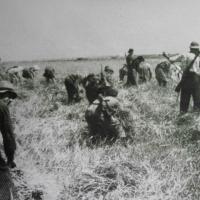 Στυμφαλία, 2 Ιουλίου 1944: Η Μάχη της Σοδειάς